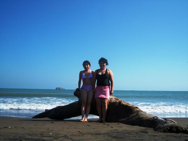 Beldamy Navidad y Playa